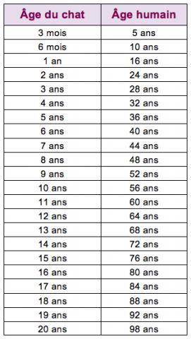 comparatif age chat