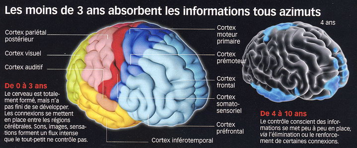 test de l'age du cerveau